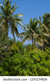 A tropical green landscape on Princess Cays in the Bahamas.