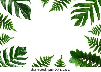 Tropical green leaf frame