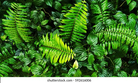 tropical green leaf on vertical garden background