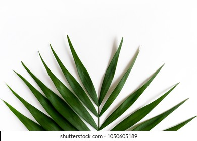 Tropical green leaf on a white background