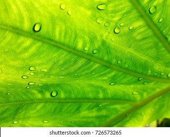 tropical green leaf structure pattern wallpaper