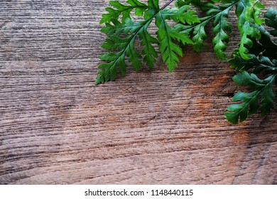 tropical green leave fern plant on wooden background