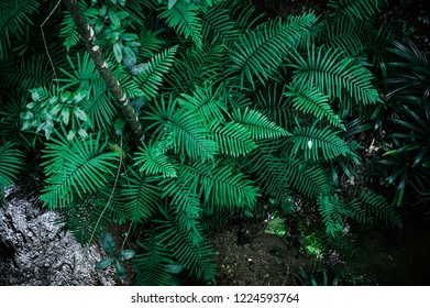 Tropical green leaves, floral pattern background