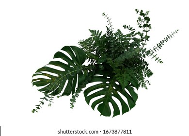 Tropical green leaves foliage plants Monstera, fern, and Eucalyptus leaves with gold glitter particles floral arrangement bunch for wedding and ceremony decoration isolated on white with clipping path