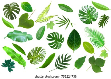 Tropical green leaves isolated on white background