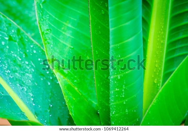 Tropical Green Leaves Landscape Tropical Leaf Stock Photo Edit Now 1069412264 The most commonly used tropical. shutterstock