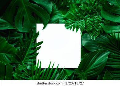 tropical green leaves and palms with white paper note frame, nature flat lay concept