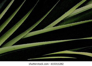 Tropical green leaves and raindrops.Dark image for background.