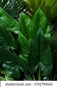 Tropical Green leaves. Summer. Green leaf