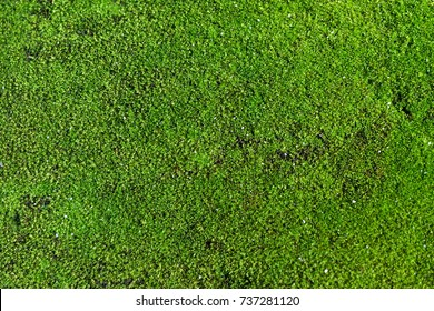 Tropical green moss texture, background with copy space