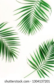 tropical green palm branches pattern frame on a white background. top view.copy space.abstract.