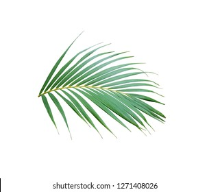 tropical green palm leaf tree isolated on white background
