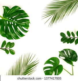 tropical green palm leaves, branches pattern frame on a white background. top view.copy space.abstract.