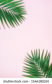 tropical green palm leaves, branches pattern frame on a pink background. top view.copy space.abstract.