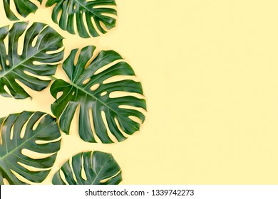 Tropical green palm leaves Monstera on yellow background. Flat lay, top view