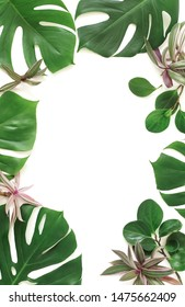 tropical green palm, monstera leaves , branches pattern isolated frame on a white background. top view.copy space.abstract.