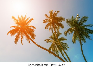 Tropical green palm trees on bright sunny sky background