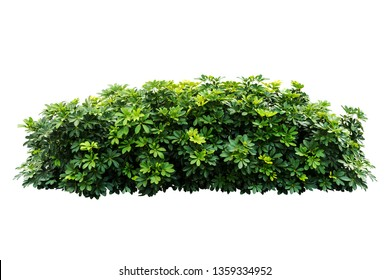 tropical green plant bush tree isolated with clipping path on white background