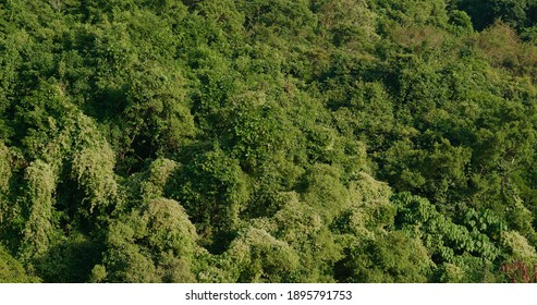 Tropical green plant on mountain