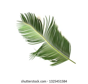 tropical green sago cycad palm leaf isolated on white background