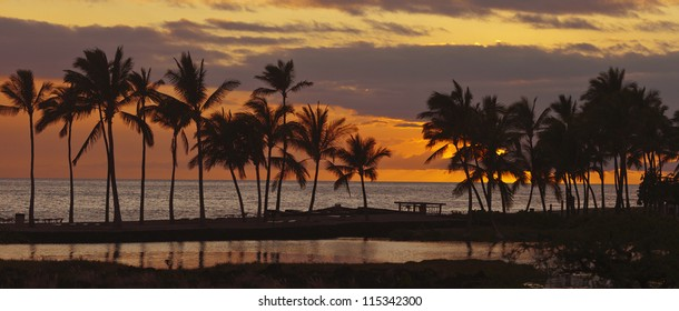 Tropical Hawaiian beach in sunset with coconut palm trees, panoramic view