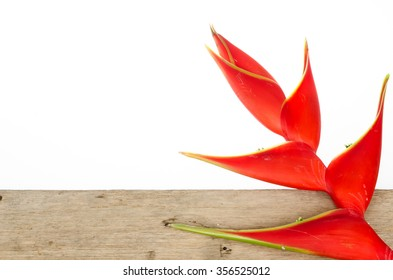 Tropical heliconia flower (Heliconia stricta) on white background