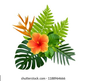 Tropical hibiscus and Strelitzia reginae flowers on green monstera and fern leaves plant bush isolated on white background