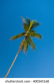 Tropical Image Azure Backdrop