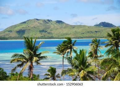 Tropical island with Fijian Palm trees