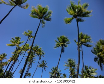 Tropical island palm trees against blue sky