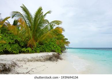 Tropical island with sandy beach, palm trees