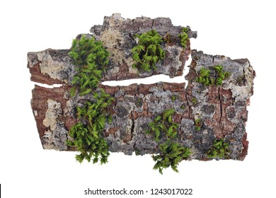 Tropical island top view  concept. On a piece of bark of a oak tree the green moss grows . Isolated on white studio macro shot