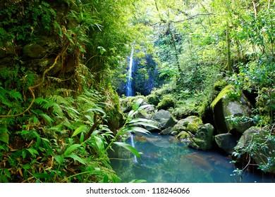 Tropical jangles with waterfall and lake. Maui. Hawaii.