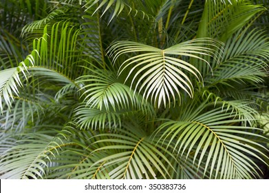 Tropical jungle background of layers of green palm fronds
