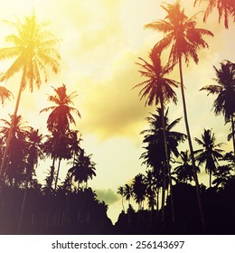 Tropical jungle background with palm tree silhouettes at sunset. Vintage effect.