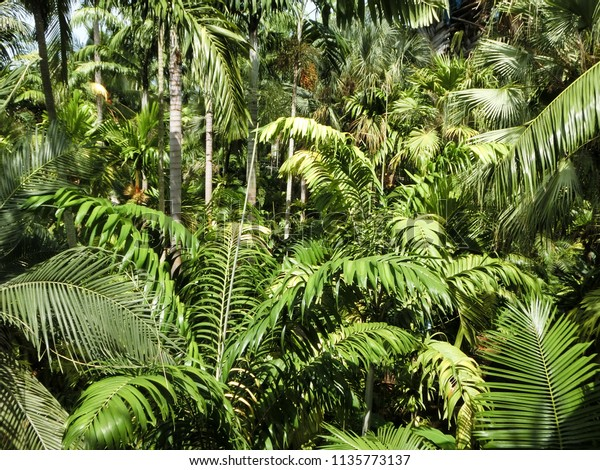 tropical jungle background wall. green leaves trees forest in sunny day.