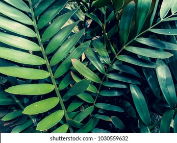 Tropical jungle foliage,dark green leaf nature background,vintage tone