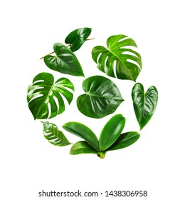 Tropical jungle monstera, orchid and flamingo green leaves composition circle shaped isolated on white background. Flower round frame arrangement. Floral design. Top view, flat lay