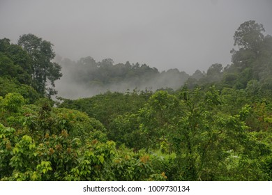 Tropical jungle morning mist