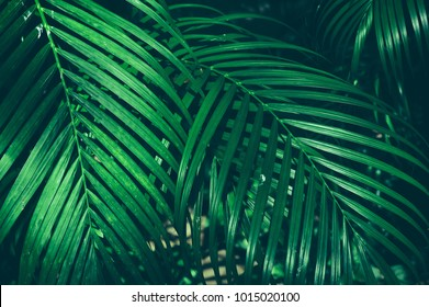 tropical jungle palm foliage, dark green toned