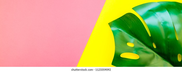 Tropical jungle palm monstera leaves on bright yellow and pink duotone paper background. Summer creative flat lay concept template for text. Long wide banner