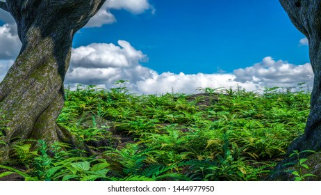 Tropical jungle plants mountain against blue sky & white clouds
