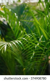 Tropical jungle undergrowth green palm leaves as background image