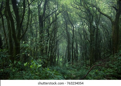 Tropical jungles of Southeast Asia. Subtropical forest landscape in Thailand. Tropical rainforest, Doi inthanon national park, Thailand. Selective Focus.