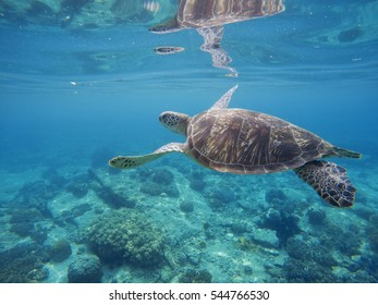 Tropical lagoon with sea animals - corals, fishes and green turtle. Sea turtle swimming underwater. Exotic island seashore nature. Undersea landscape with sea bottom and tortoise. Lovely marine animal