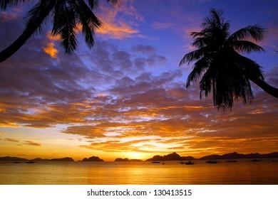 Tropical landscape.