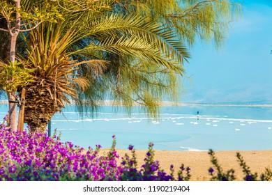Tropical landscape with dramatic sky. Dead sea shore. Palm trees on the beach. Ein Bokek, Israel
