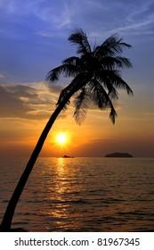 Tropical Landscape Evening