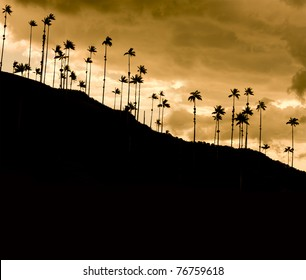 Tropical landscape. Mountain palms. Cocora Valley, Quindio, between the mountains of the Cordillera Central in Colombia. Habitat of the majestic palm wax, Colombia's national tree.