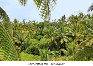 Tropical landscape with palms and branches in fron of the picture, Blue asky, Bali Island, Indonesia